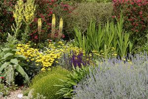 W suchych ogrodach sprawdzą się rośliny o srebrzystym ulistnieniu, pokrytych kutnerem lub woskowym nalotem