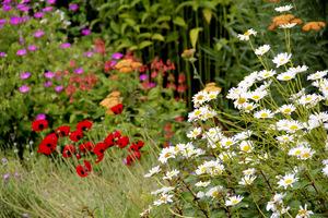 Sadzenie roślin rodzimych, występujących w okolicy lub gatunków ogrodowych tych roślin ma na celu zapobieganie erozji gleby