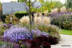 Werbena w jesiennym ogrodzie z trzcinnikami i astrami