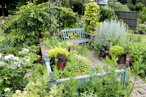 Ogródek ziołowy pachnie w całości, zapachy współgrają ze sobą
