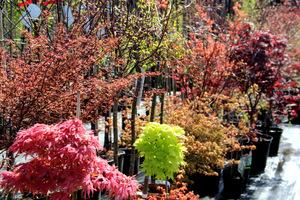 Zbliża się czas ogrodowych zakupów roślinnych. Nasze szkółki oferują na wiosnę ogromny wachlarz roślin