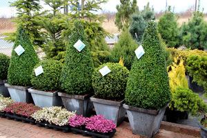 Rośliny bardzo dobrej jakości i zdrowe wzbudzają nasze zainteresowanie
