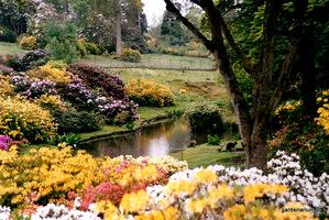 Wielkie okazy różaneczników w ogrodzie Leonardslee w Kornwalii