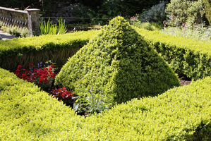 Precyzyjne cięcie pozwala na tworzenie w ogrodzie atrakcyjnych topiarów