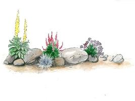Umieszczając rośliny zwracamy uwagę na ekspozycję słoneczną i wilgotność podłoża