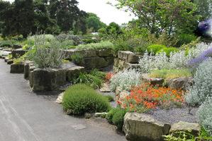 Ogród skalny jak sama nazwa wskazuje, powinien być zbudowany ze skał i powinny w nim rosnąć rośliny skalne, alpejskie