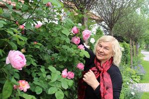 Jedna z moich ulubionych róż - 'Constance Spry' o zapachu mirry