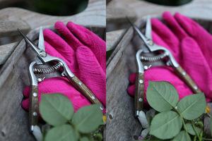 Sekator - nożyce do precyzyjnego przycinania róż