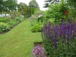 Na pierwszym planie bylinowa szałwia (Salvia nemorosa) i kwiatostan czosnku  (Allium)