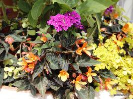Czyścimy przekwitnięte kwiaty w kompozycjach balkonowych i tarasowych