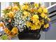 Żółte begonie i biała lobelia