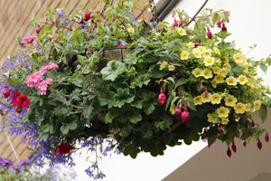 Kwiaty W Wiszacych Koszach Sadzenie I Pielegnacja Ogrodowisko