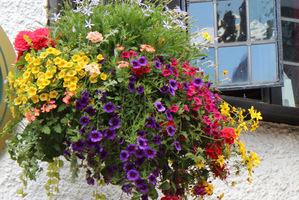 Kwiaty W Wiszących Koszach Sadzenie I Pielęgnacja Ogrodowisko