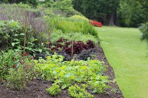Ściółkowanie w ogrodzie jest jedną z najważniejszych spraw jeśli chodzi o zdrowotność gleby i ochronę przed nadmiernym rozwojem chwastów