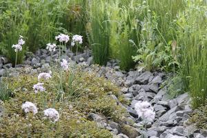 Kamyki są często stosowane w ogrodach skalnych, żwirowych i preriowych