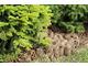 Szyszki należą do bardzo atrakcyjnych ściółek jeśli chodzi o ich wygląd, jednak nie izolują gleby tak dobrze
