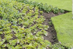 Jednoroczne rośliny rosną w kompoście, który jednocześnie pełni rolę ściółki