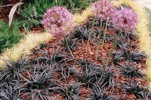 Najważniejsze zalety kory sosnowej to pozytywne walory estetyczne, wolno się rozkłada, wzbogaca glebę w próchnicę, poprawia strukturę gleby