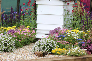 Żwirek w efektownym ogrodzie