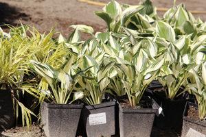 Materiał roślinny dobrej jakości to podstawa