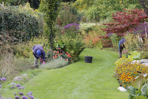 Oczyszczamy rabaty z zaschniętych lub chorych liści, kwiatostanów. Robimy porządki