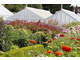 Ogród użytkowy połączony z ogrodem warzywnym niesie same korzyści