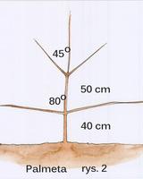 Formowanie palmety, rys 2