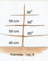 Formowanie palmety, rys 4