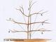 Trzeci rok - budujemy koronę drzewa pilnując odpowiedniego rozstawu pieter, aby maksymalnie wykorzystać światło. Gałązki przywiązujemy do podpór