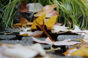 Wyławiamy liście zanim namokną i opadną na dno
