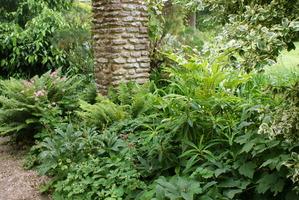 Rośliny cienia pod pergolą