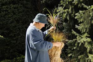 Robimy ozdobny chochoł na rośliny wrażliwe, np. klon palmowy