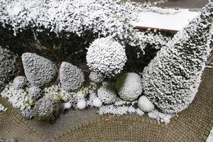 Zasypało, ale nie martwmy się, śnieg chroni najlepiej