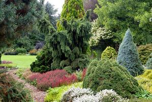 Ten ogród zachowa kolory na zimę