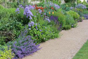 Mocna ekspozycja słoneczna i mało wody, znacznie skraca żywot tych pięknych roślin