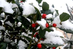Dla zimozielonych roślin to trudny okres