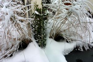 Ośnieżone trawy odbijają się w lustrze. Wiatr je porozwiewa po ogrodzie, ponieważ nie są powiązane