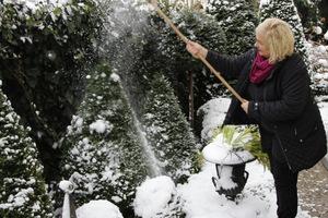 Strząsamy śnieg z roślin, aby nie połamał obciążonych gałęzi