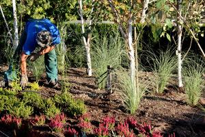 Rabata była tworzona jesienią, wtedy sadzimy cebule krokusów