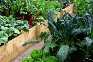 Warzywa w skrzyniach można wcześniej zbierać
