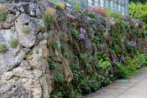 Atrakcyjna ściana skalna