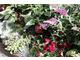 Czarne papryki, ciemne liście różnych roślin, ciemne kwiaty z dodatkiem traw