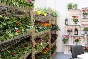 Ciekawie wyeksponowane rośliny sezonowe