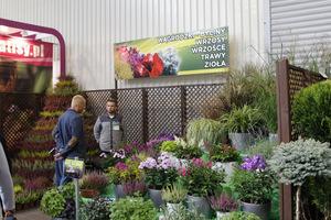 Stoisko Wągrodzki - byliny, wrzosy, wrzośce, trawy i zioła