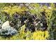 Oferta roślin o kolorowych liściach