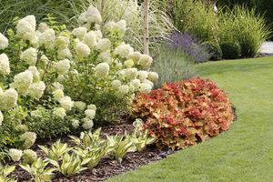 Hydrangea paniculata 'Limelight' z funkiami 'Fire&Ice' oraz pomarańczowymi żurawkami