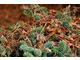 Strząsamy liście z iglaków