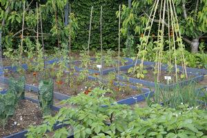 Podwyższone warzywniki z wigwamami do uprawy fasoli lub innych warzyw, które lubią się wspinać po podporach