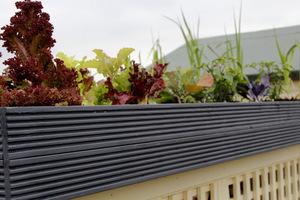 Warzywny ogród na dachu śmietnika