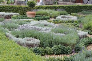 Efektowny ogród ziołowy, który może stanowić także pomysł na taki warzywnik